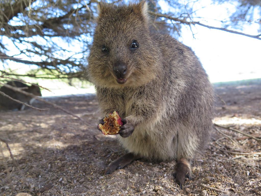 Australian Animal Baby Clothes