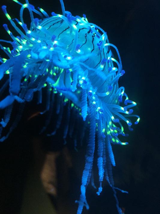 060516_aquarium29
