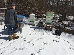 setting up hives IMG_0583