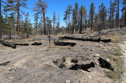 0414 Lake Fire burn zone on the PCT showing where the fire burned the dead roots below the ground | by _JFR_