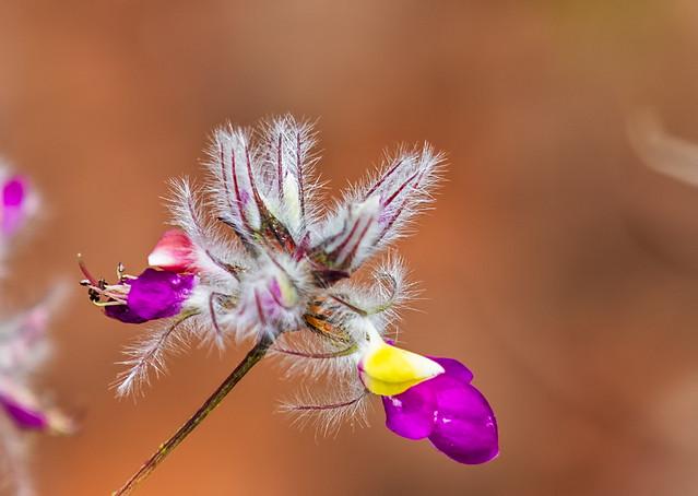 A2-Flower-147-7D2-041017
