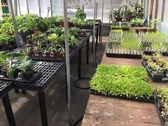 MMGA_greenhouse IMG_0458