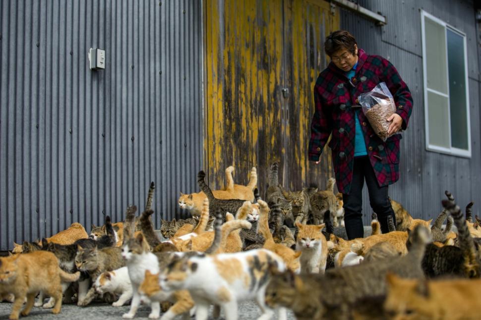 japan-cats