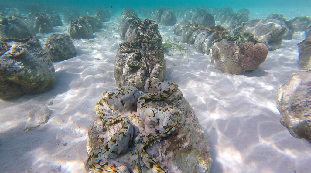 Camiguin - Giant Clams Sanctuary