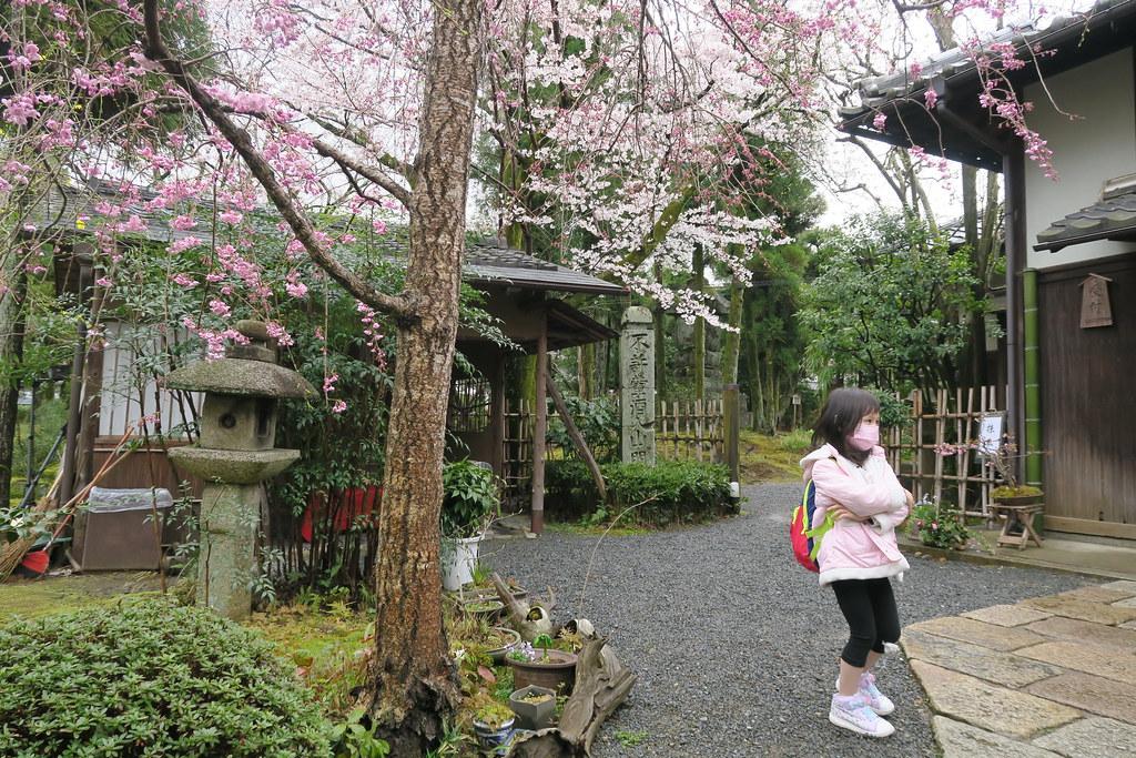 白紗村莊.橋本關雪紀念館 裡面也種了許多不同種類的櫻花