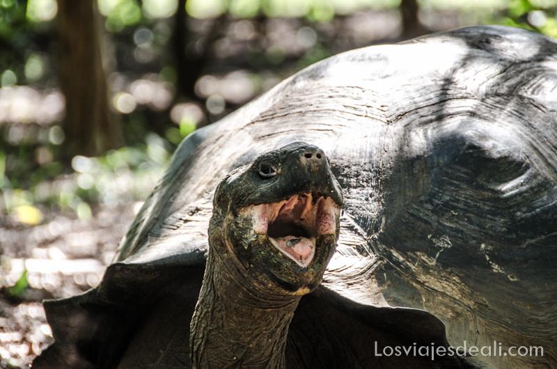 viajar a Galápagos por tu cuenta