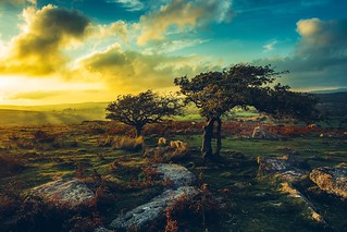 We are so lucky to have some real wilderness on our doorstep in the Southwest. I always enjoy a trip up onto #Dartmoor. #lovedevon #swisbest #wilderness #wild #windy #skyporn #trees #stunted #devon #stormy #nature_perfection #nature #getoutdoors #getoutsi | by Play of light