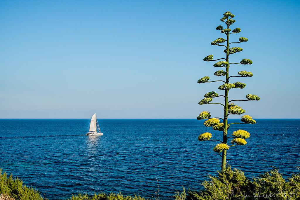 Fleur D Agave Jean Jacques Mattei Flickr