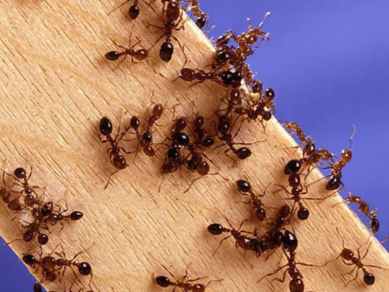 how to kill termite colony