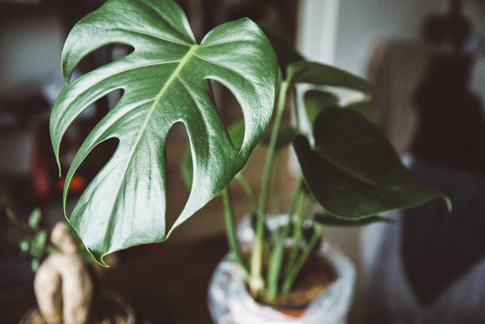 kasvienhoito-8