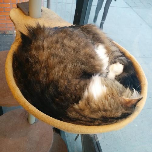 Catbowl