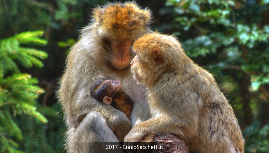 ennio sacchetti - la montagna delle scimmie - www.enniosacchetti.it - tutti i diritti riservati