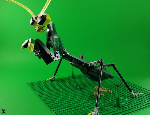 Mantis | by Norweasel