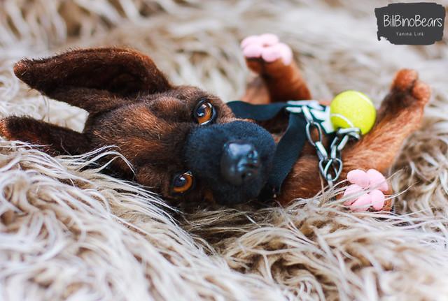 Tyson - malinois Pup