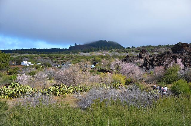 Almond blosson route, Santiago del Teide, Tenerife
