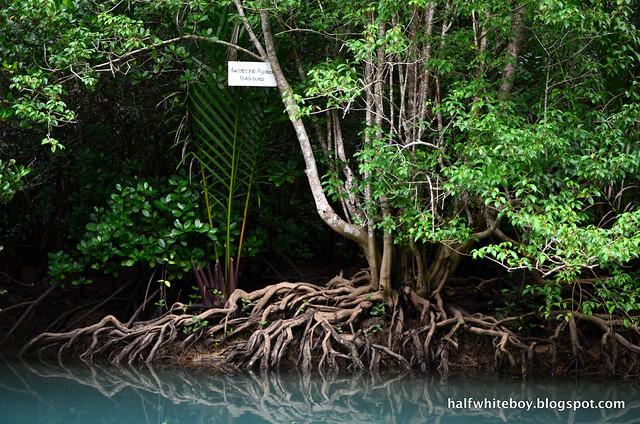 halfwhiteboy - bojo river cruise aloguinsan 10