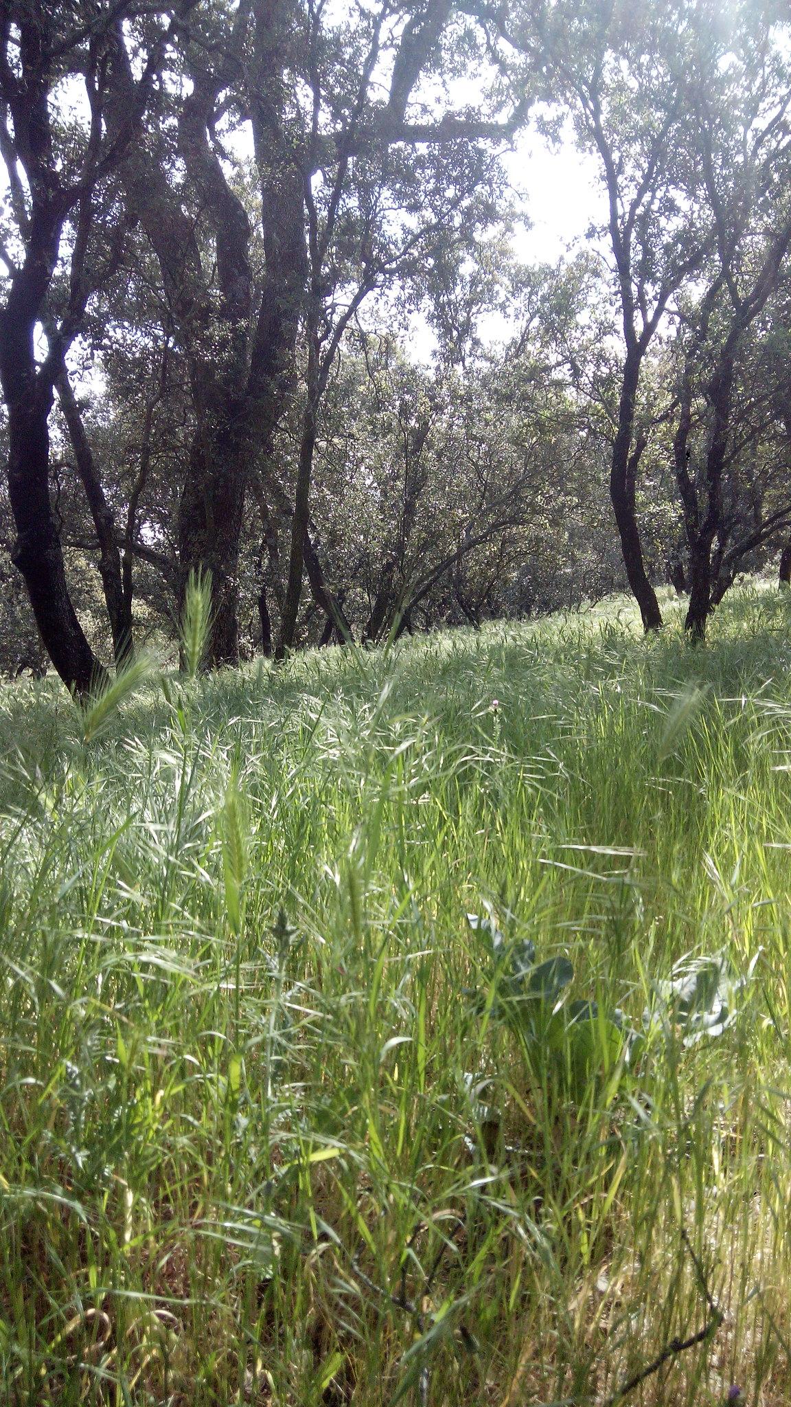 pradera y árboles