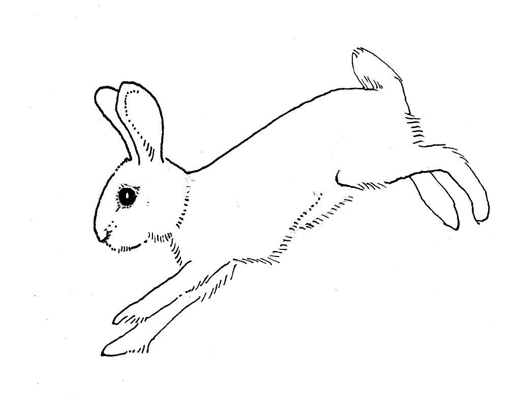rabbit outline running | Dru | Flickr