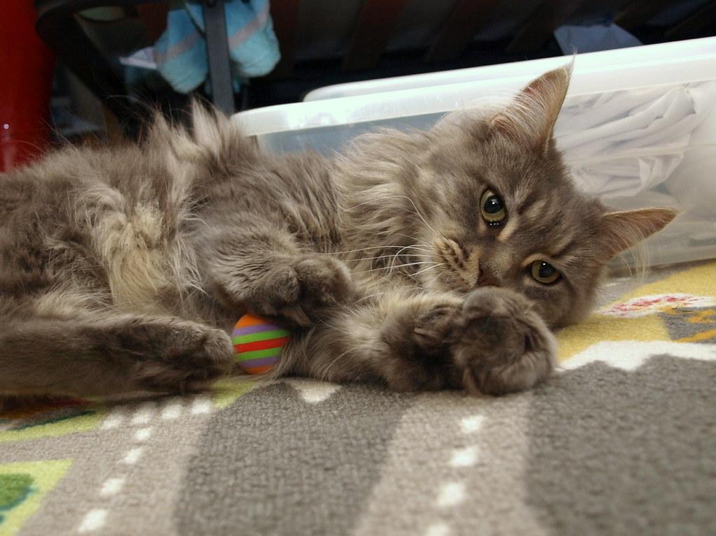Is Breeze Cat Litter Flushable
