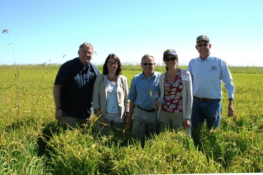 Lundberg family farms arsenic