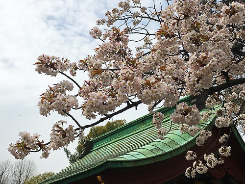 Hanami 2016