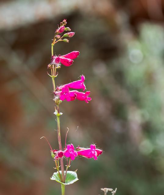 Flower-133-7D2-041017