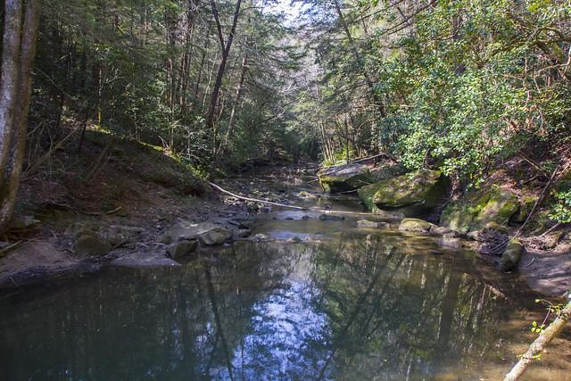 Bear Camp Creek Hike