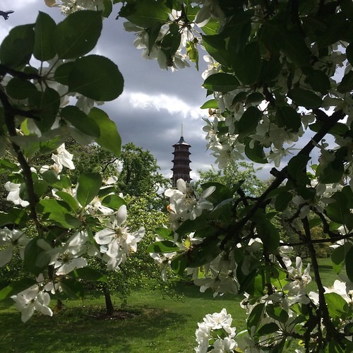 Pagoda in apple blossom