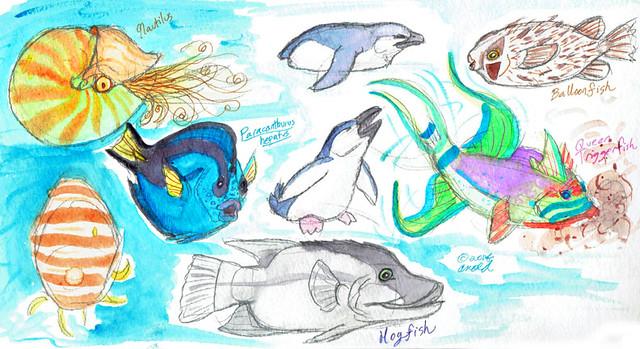 3.30.17 New England Aquarium Studies