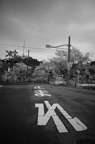 桜と鉄 白黒