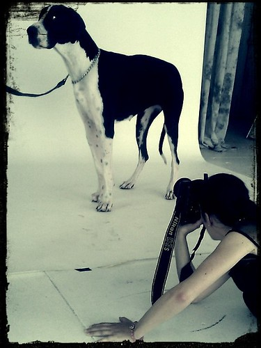 Great Dane in the studio today w/ Erica Lyn | by Beloved Photos