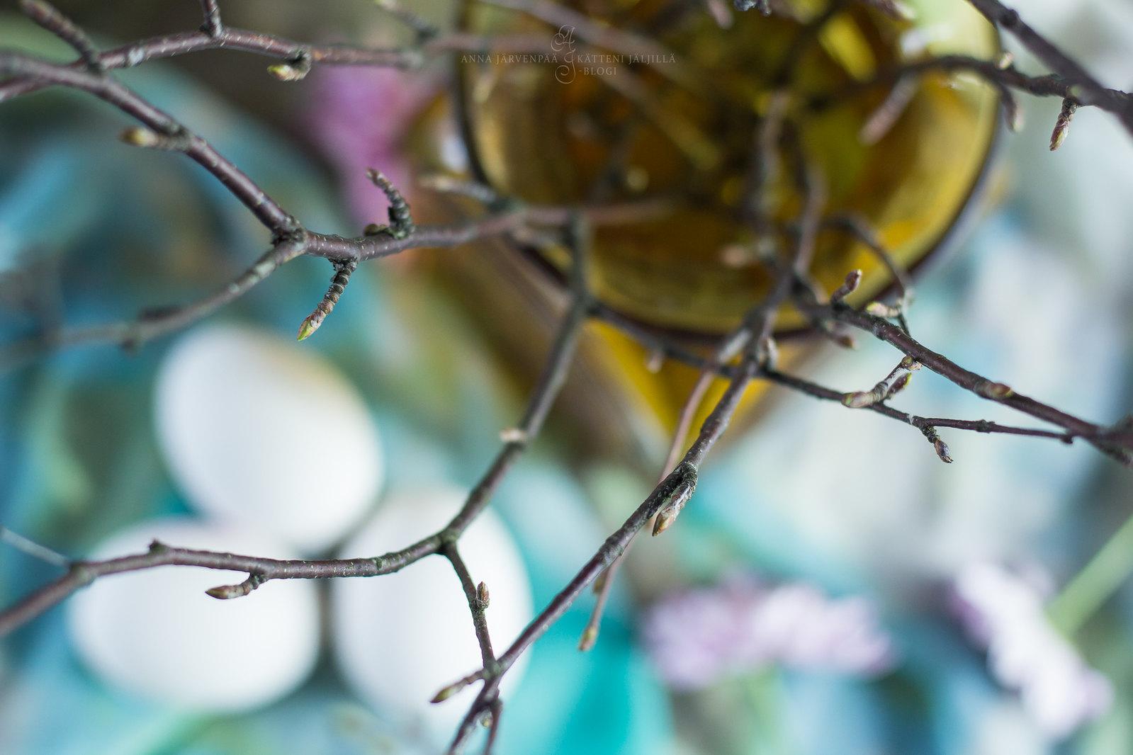 Kevään merkit / Signs of the spring
