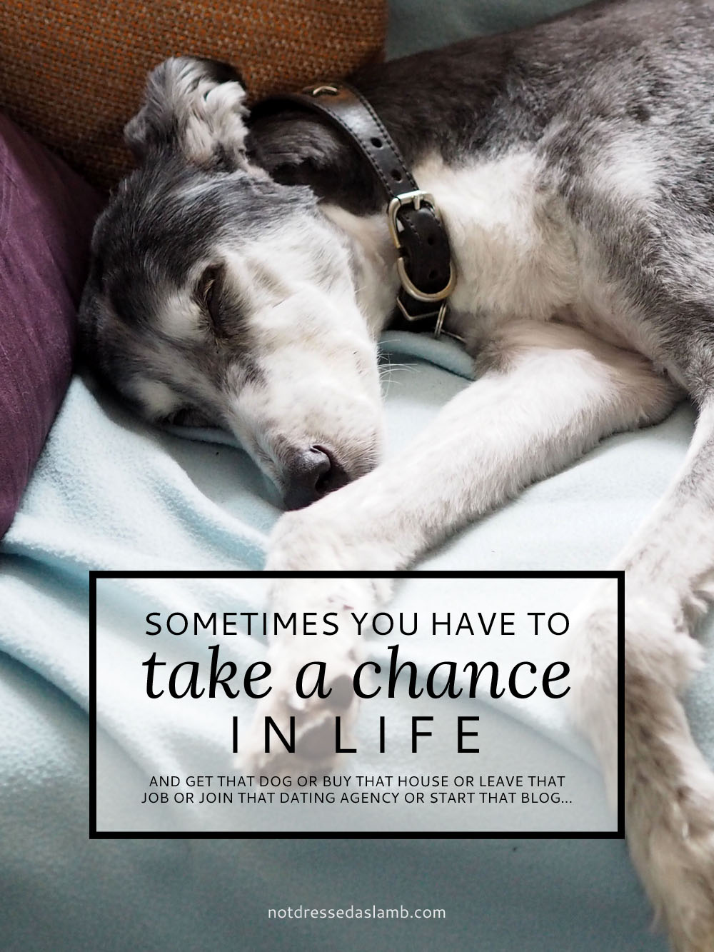 Why Sometimes You Need to Take a Chance in Life and and get that dog or buy that house or leave that job or join that dating agency or start that blog... | Not Dressed As Lamb