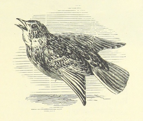 Image taken from page 495 of 'Favourite English poems and poets. Illustrated with ... engravings on wood from drawings by eminent artists. New and improved edition' | by The British Library