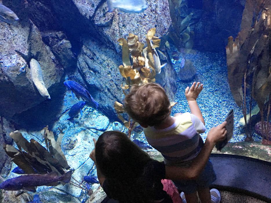 060516_aquarium10