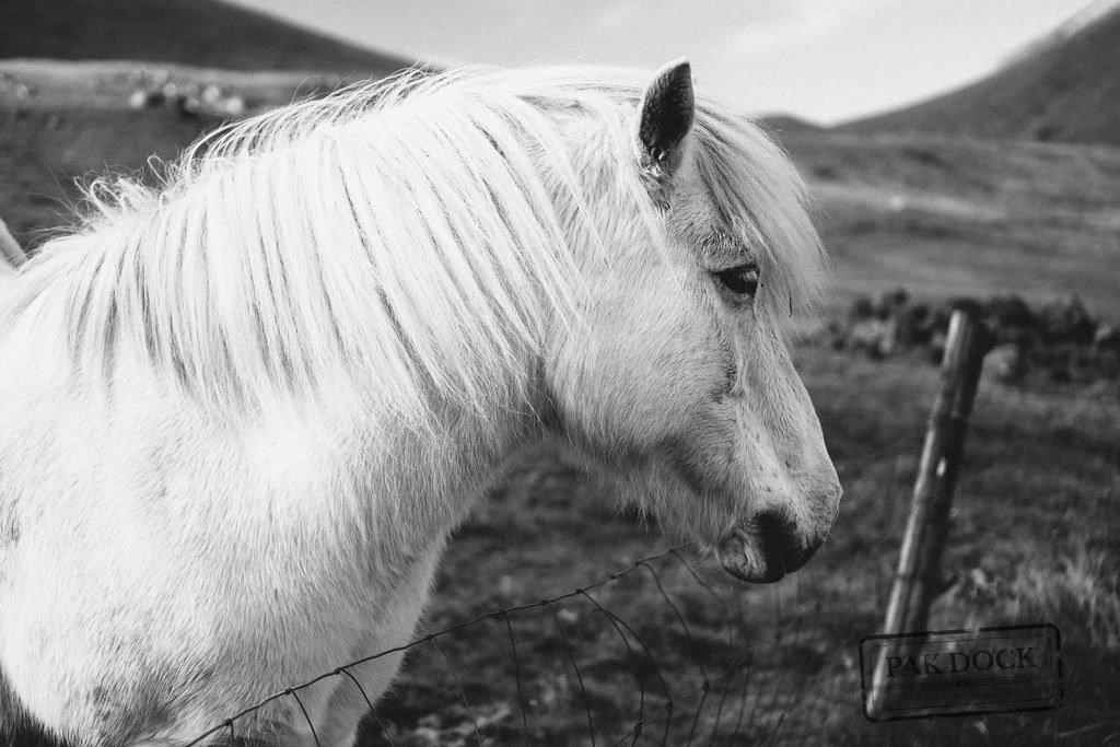 Horse in Kalsoy