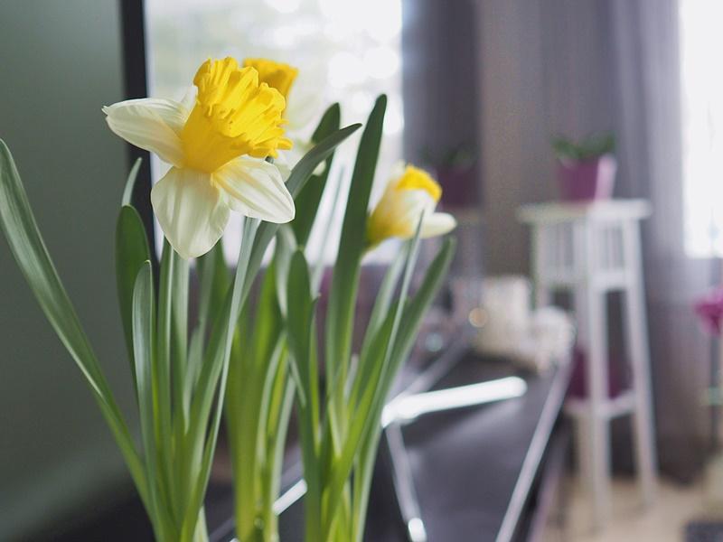 narsissi-kukka-kevät-pääsäinen