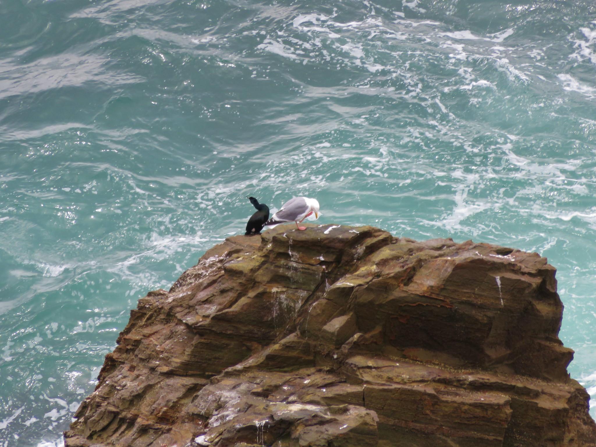 Birds on Cape Falcon