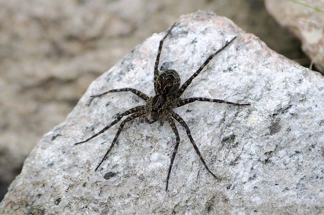 very scary spider | Flickr - Photo Sharing!