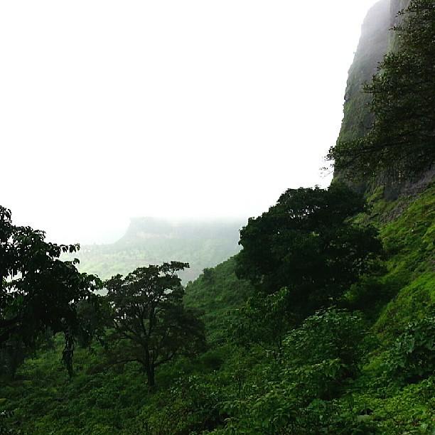#naturalbeauty #beautiful #nature #greenery #rain #India