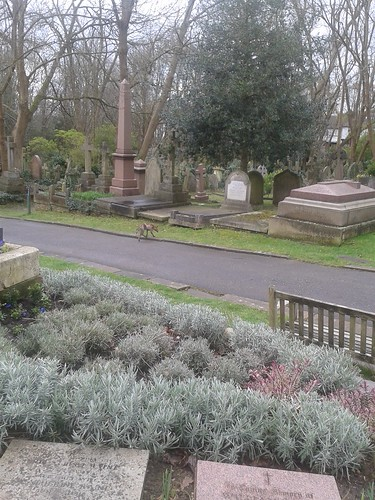 Fox in Highgate Cemetery