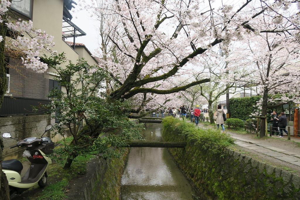 看到左邊的亮點嗎? 其實在京都,騎機車的人還不少耶