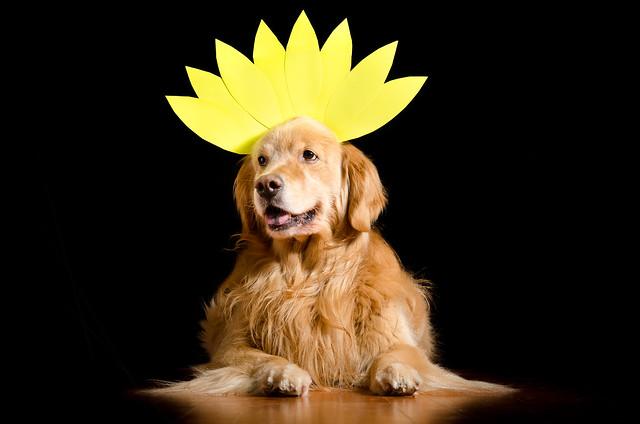 Dog Flower?