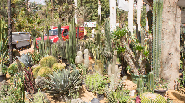 Cacti everywhere at Egypt's flowers show 2017
