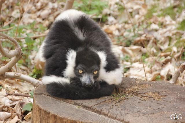 Frühlingstag Tierpark Friedrichsfelde am 02.04.2017121