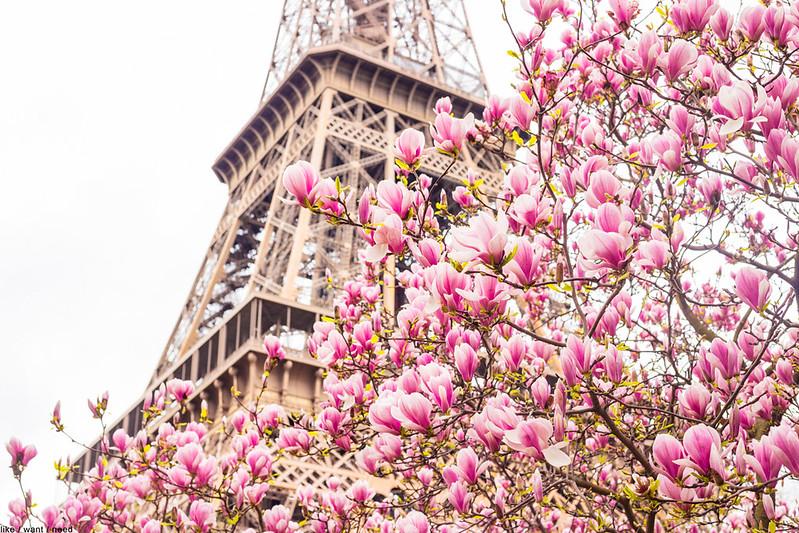 Blossoms & Eiffel
