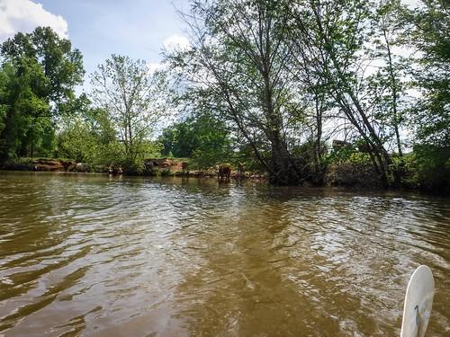 Dyar Pasture and Lake Oconee-110