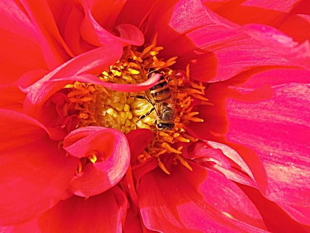 Nepal Village Flower