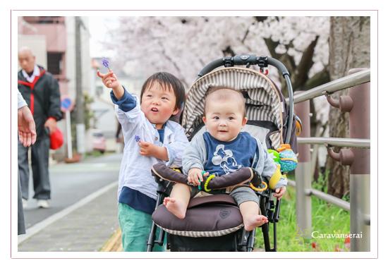 桜と一緒に家族写真 山崎川 名古屋市瑞穂区 お花見 ロケーション撮影 人気 オススメ 出張撮影
