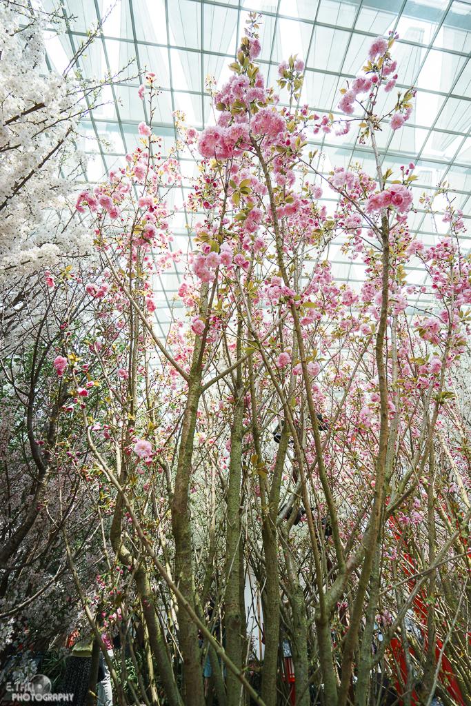 Blossom Bliss - 007